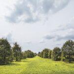 viale dei Carpini, Parco della Reggia di Monza, Foto di Mario Donadoni, Archivio Consorzio Villa Reale e Parco di Monza
